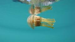 Jellyfish in Lagoon Stock Footage