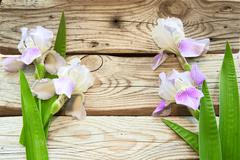 Irises on a background of old boards. Aged wood in the background Stock Photos