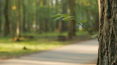 Blurred background of people activities in park with bokeh, spring and summer - stock footage