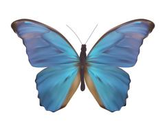 Blue Butterfly Isolated on White Realistic Vector Illustration - stock illustration