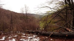 Fallen Dead Wood and Bare Trees on a Background of Gray Slopes of the Mountains Stock Footage