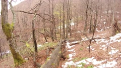 Fallen Tree in the Forest Bare Mountain Panorama From Left to Right Stock Footage