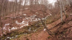 Dry Foliage Partially Covered With Snow in Bare Forest in Mountains Panorama Stock Footage