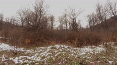 Snow Covered Meadow With Withered Grass at Edge of Leafless Forest Stock Footage