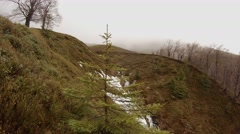 Fir Branches Swaying in the Wind on the Mountain Covered With Grass on the Stock Footage