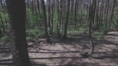 Drone flying through a crooked forest - shot02 - FLAT Stock Footage