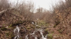 Water of Stream Flow Down Along Dry Branches of Trees in Forest Stock Footage