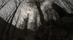 Dim Light of the Sun Through the Clouds Illuminates Bare Crowns of the Trees in Stock Footage