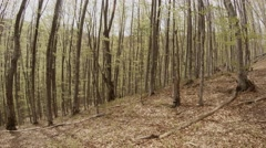 A Plurality of Thin Tree Trunks Becomes Covered in a Young Forest Mountain Stock Footage