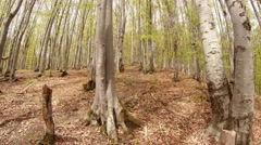 A Plurality of Thin Trunks of Trees in a Young Mountain Forest Stock Footage