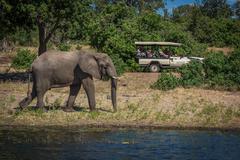 Elephant walking along wooded riverbank alongside jeep - stock photo