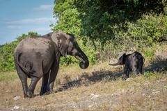 Mother and baby elephant standing beneath tree Stock Photos