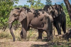 Two elephants beneath tree in dappled sunlight Stock Photos