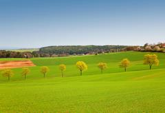 Row of trees in green field - stock photo