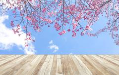 Wood table and Beautiful of pink flowers cherry blossom or sakura flower on b Stock Photos