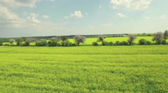 Flying over a rapeseed fields divided by rows of blooming fruit trees Stock Footage