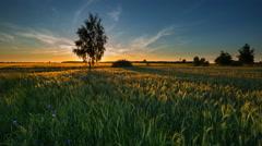 4k timelapse of beautiful summer green fields under sunset sky. - stock footage