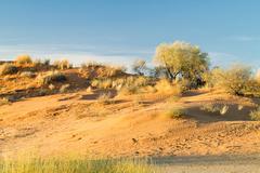 Sand dunes, Kalahari Desert, Southern Africa, Africa - stock photo