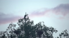 Grey Heron On Tree Branch Stock Footage
