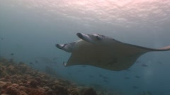 Great dive with large manta rays. - stock footage