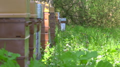 Hives full of bees in nature with humming. Sunny summer day + audio - stock footage
