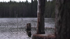 Serenity of Lake Trees 4K - stock footage