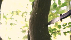 Knife in the tree in the forest. Military practise Stock Footage