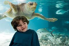Boy in front of sea turtle in aquarium Stock Photos