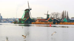 View of windmills at Zaanse Schans and seagulls Stock Footage