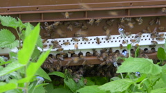 Entrance of hive full of busy bees through vegetation Stock Footage