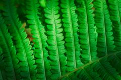 Fresh young green fern leaf close up Stock Photos