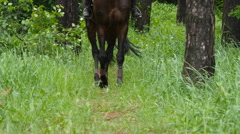 Legs of horse walk in green grass as it approaches Stock Footage
