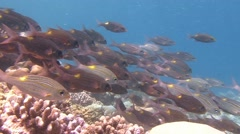 A flock of colorful tropical fish. - stock footage