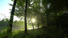 Floodplain forest at early morning with sun glitter Stock Footage