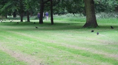 Huge green park with crows Stock Footage