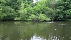 Pond surrounded by beautiful nature Stock Footage