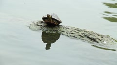 Turtle sitting on a log in a pond - stock footage