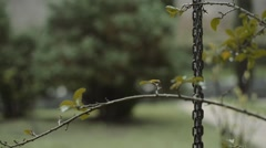 Cozy Afternoon Rain on Branches and Leaves Stock Footage
