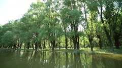 Danube floodplain forests filming from canoe Stock Footage
