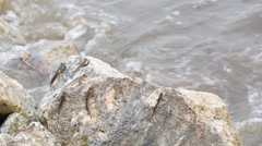 Mudskipper or Amphibious fish Stock Footage