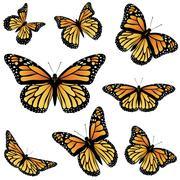 Orange Monarch Butterfly Stock Illustration