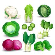 Vegetable set with cabbages - stock illustration