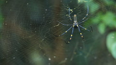 Big spider on web Stock Footage