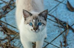 Cute cat with blue eyes playing inside an empty pool Stock Photos