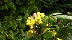 Early spring in the city garden of Krasnodar, Russia. Escargots spring flowers. Stock Footage