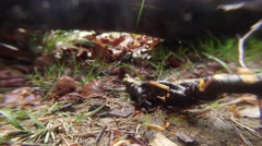 Salamander is Crawling on the the Grass Under the Fallen Tree Stock Footage