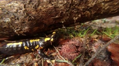 Salamander is Crawling Across the Grass on a Background of Tree Bark Stock Footage