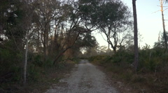 Island Forest Dirt Roadway - stock footage
