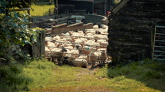 Sheep In Enclosure, Natural Farming Stock Footage