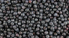 Fresh, ripe blueberries rotate, wild berry. Bilberry clockwise rotation - stock footage